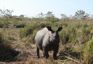 Indian Rhino. Photo Credit-Rakesh Soud