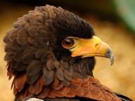 My Beak