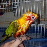 Mango Sweetie