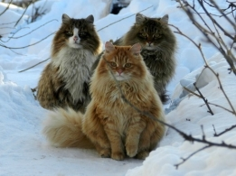 Bushcats Together