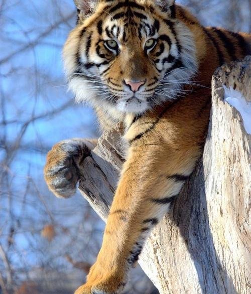 Bushycat