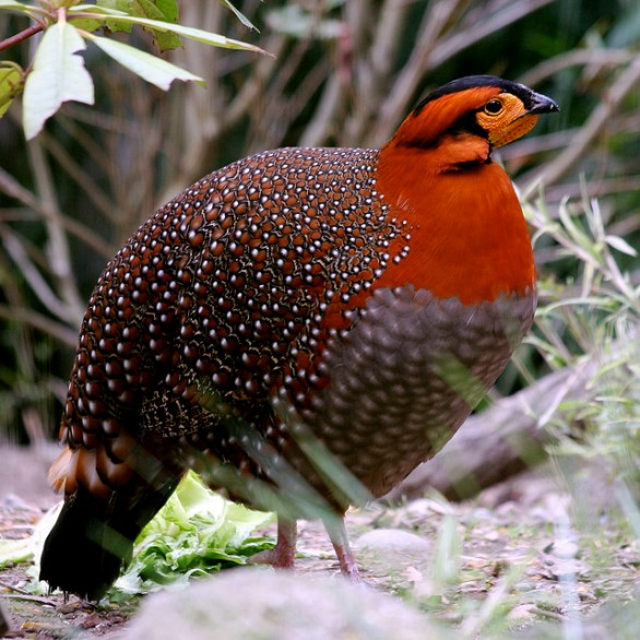 Charismatic Fauna