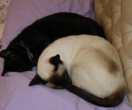 Gary & Nico Sweetie