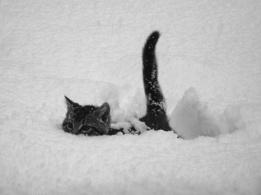 Meow Meow M