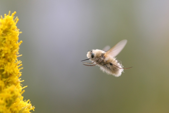 Sweeties Fly