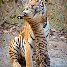 Image Courtesy : Gurudeep Ramakrishna